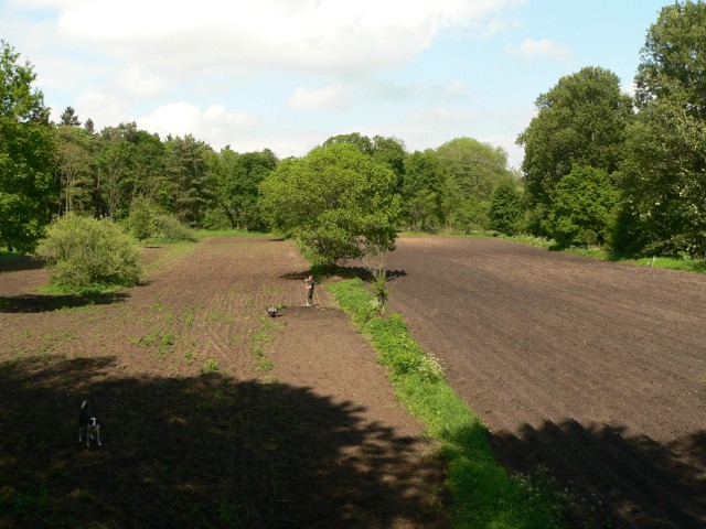 a waldgarten01sized