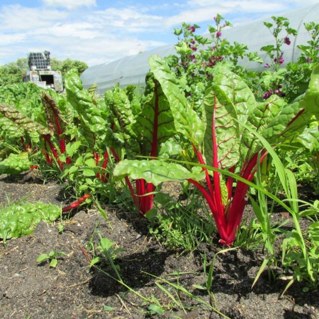 organic farming at Bienenwerder 03  by Koschy